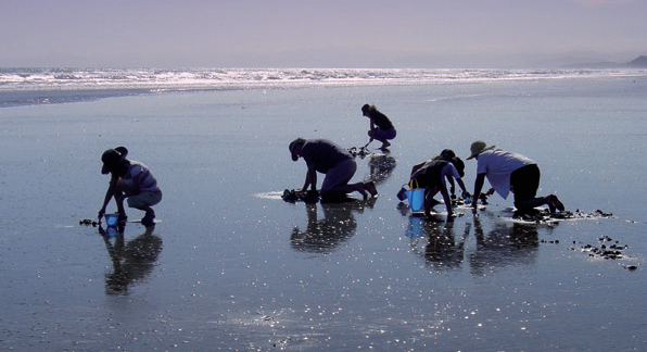 A group of people collecting shells